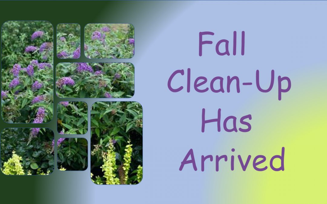 Fall Clean-Up Has Arrived